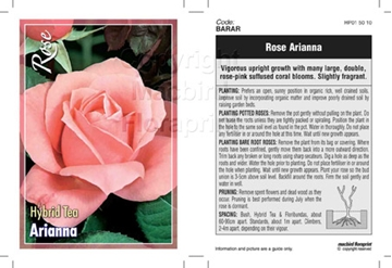 Picture of ROSE ARIANNA (HT)