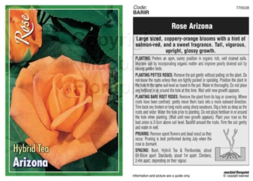 Picture of ROSE ARIZONA (HT)
