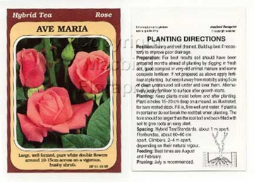Picture of ROSE AVE MARIA (HT)