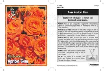 Picture of ROSE APRICOT GEM (FL)