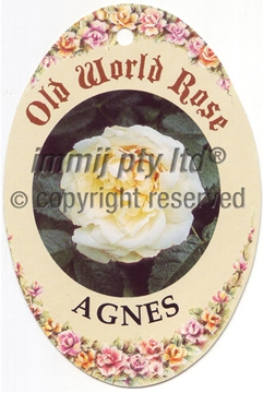 Picture of ROSE AGNES (OW)