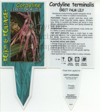 Picture of CORDYLINE TERMINALIS