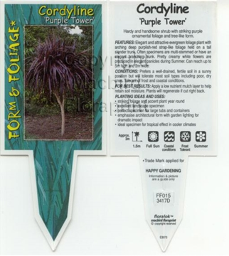 Picture of CORDYLINE PURPLE TOWER