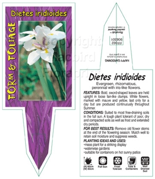 Picture of DIETES IRIDIOIDES