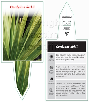 Picture of CORDYLINE KIRKII