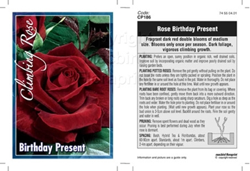 Picture of ROSE BIRTHDAY PRESENT (CL)
