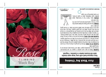 Picture of ROSE BLACK BOY (CL)