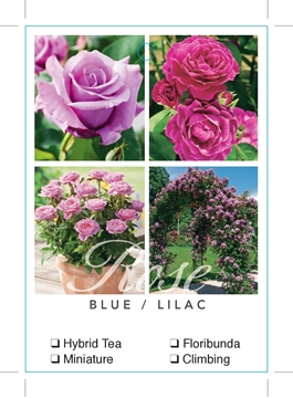 Picture of ROSE BLUE LILAC (UNNAMED VARIETY TICK BOX)