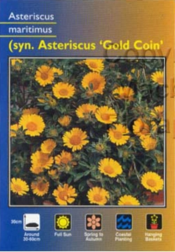 Picture of ASTERISCUS MARITIMUS GOLD COIN