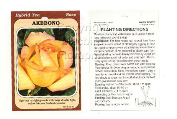 Picture of ROSE AKEBONO (HT)
