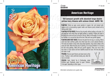 Picture of ROSE AMERICAN HERITAGE (HT)