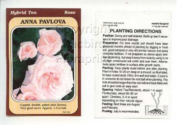 Picture of ROSE ANNA PAVLOVA (HT)