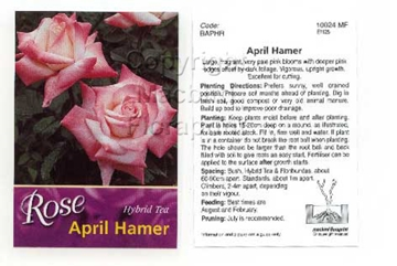 Picture of ROSE APRIL HAMER (HT)