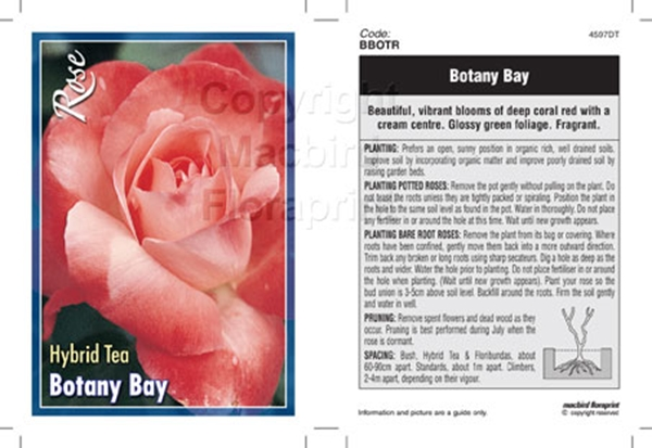 Picture of ROSE BOTANY BAY (HT)