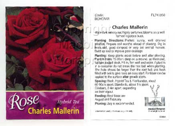 Picture of ROSE CHARLES MALLERIN (HT)
