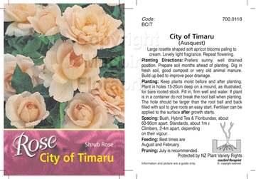 Picture of ROSE CITY OF TIMARU (SHRUB)