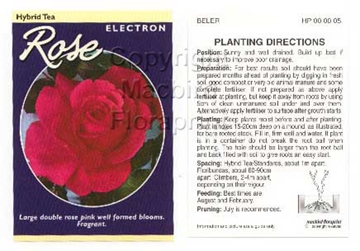 Picture of ROSE ELECTRON (HT)