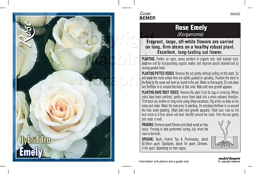 Picture of ROSE EMELY (HT)