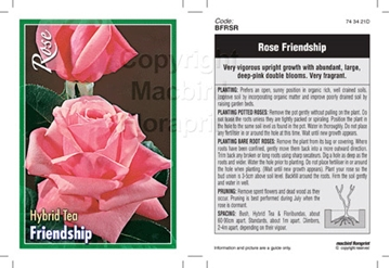 Picture of ROSE FRIENDSHIP (HT)