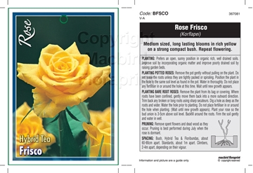Picture of ROSE FRISCO (HT)