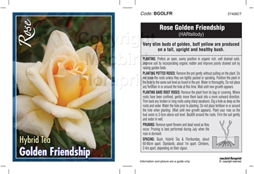 Picture of ROSE GOLDEN FRIENDSHIP (HT)