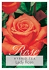 Picture of ROSE LADY ROSE (HT)