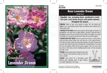 Picture of ROSE LAVENDER DREAM (GROUNDCOVER)