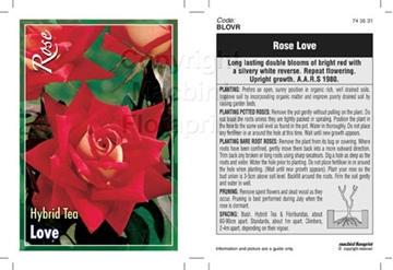 Picture of ROSE LOVE (HT)