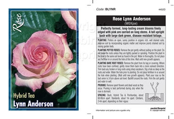 Picture of ROSE LYNN ANDERSON (HT)