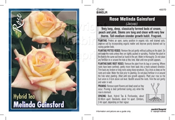 Picture of ROSE MELINDA GAINSFORD (HT)