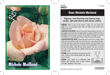 Picture of ROSE MICHELE MEILLAND (HT)