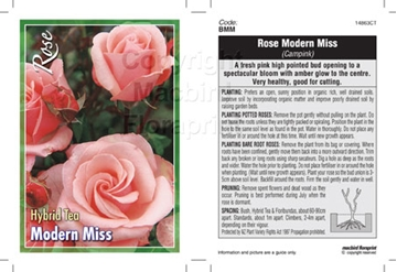 Picture of ROSE MODERN MISS (HT)