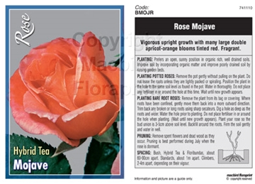 Picture of ROSE MOJAVE (HT)
