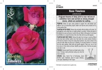 Picture of ROSE TIMELESS (HT)