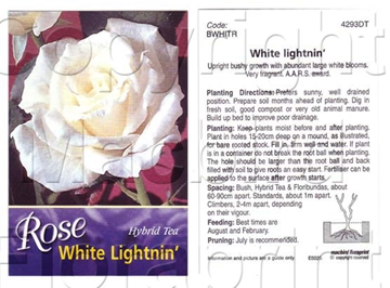 Picture of ROSE WHITE LIGHTNING (HT)