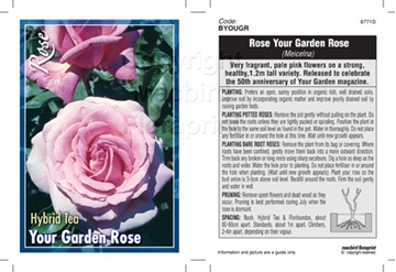 Picture of ROSE YOUR GARDEN ROSE (HT)