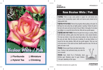 Picture of ROSE BICOLOUR WHITE PINK (UNNAMED VARIETY TICK BOX)