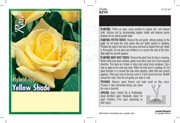 Picture of ROSE YELLOW (UNNAMED VARIETY) (HT)