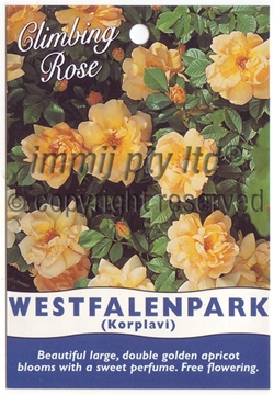 Picture of ROSE WESTFALENPARK (CL)