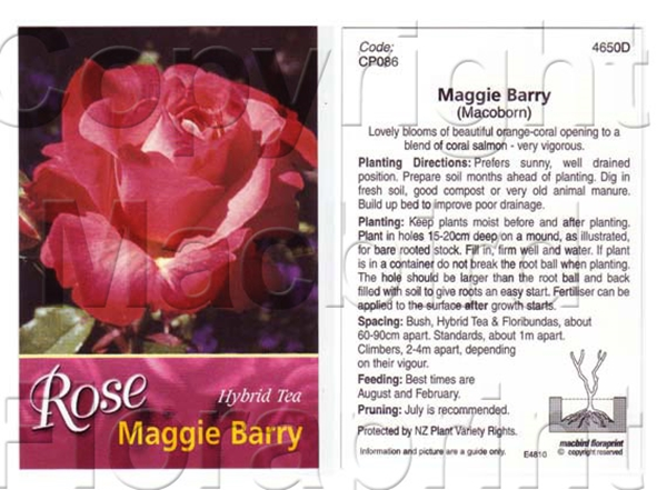 Picture of ROSE MAGGIE BARRY (HT)