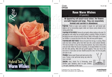 Picture of ROSE WARM WISHES (HT) **NZ CUSTOMERS ONLY**