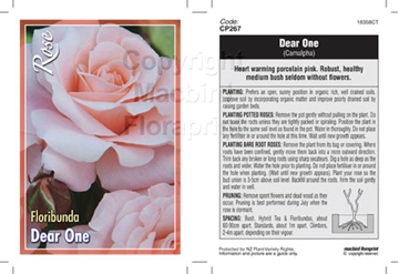 Picture of ROSE DEAR ONE (FL)