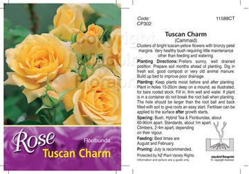 Picture of ROSE TUSCAN CHARM (FL)