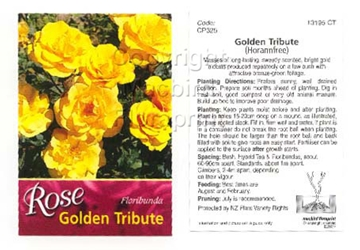 Picture of ROSE GOLDEN TRIBUTE (FL)
