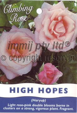 Picture of ROSE HIGH HOPES (CL)