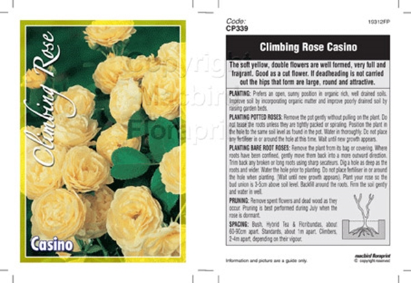 Picture of ROSE CASINO (CL)
