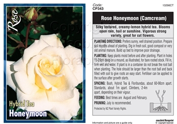 Picture of ROSE HONEYMOON (HT)