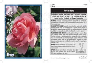 Picture of ROSE HERO (ER)
