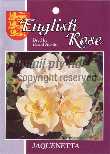 Picture of ROSE JAQUENETTA (ER)