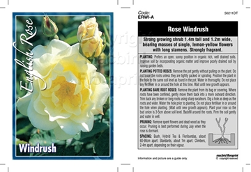 Picture of ROSE WINDRUSH (ER)
